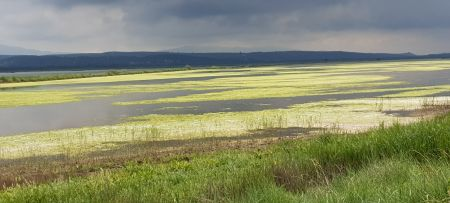 There is hope for Mediterranean wetlands